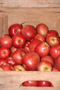Gala Apples in Crate