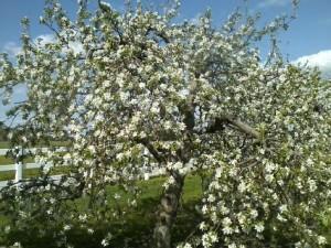 full bloom anoka