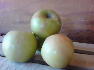 "The ""Gold Rush"" apple."
